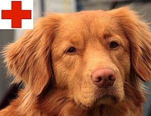 idea-negocio-seguro-perros