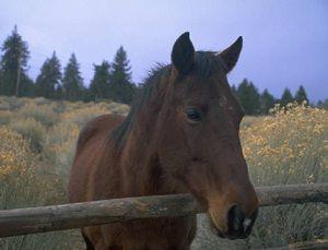fabula-viejo-caballo