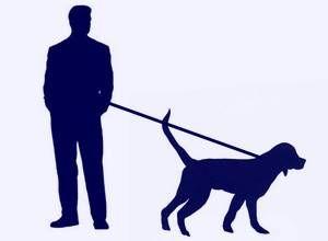 negocios-rentables-con-animales