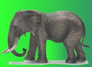 Los-ciegos-y-el-elefante.jpg