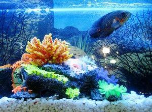 mantenimiento de acuario