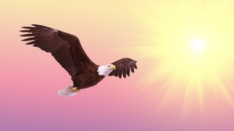 fábulas águilas con moraleja