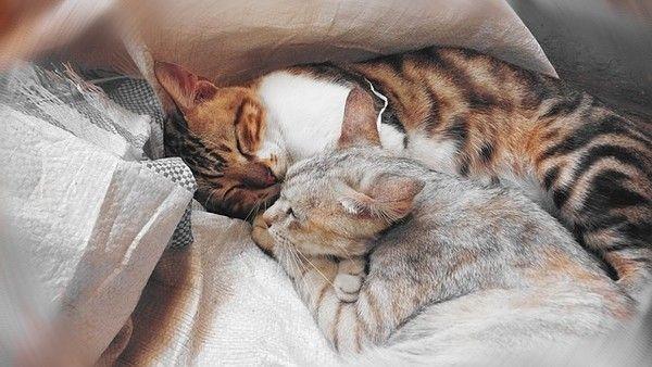 gatos-abrazados